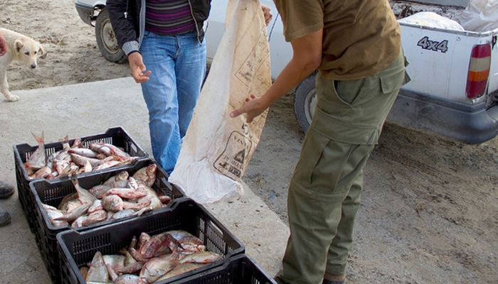 zeci-de-kilograme-de-peste-confiscate