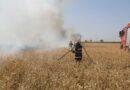 Incendii de vegetație uscată la Băilești